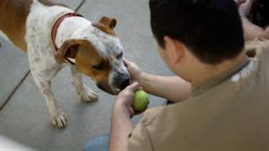 Pup Pre-Screening