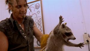 Raccoon Cage Match