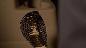 Crouching Tiger, Hidden Cobra