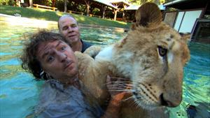 Swimming with Ligers